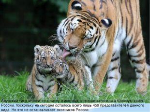 Амурский тигр относится к числу животных, которые занесены в Красную книгу Ро