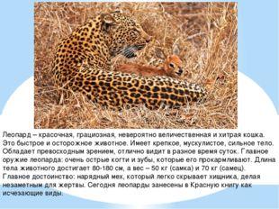 Леопард – красочная, грациозная, невероятно величественная и хитрая кошка. Эт