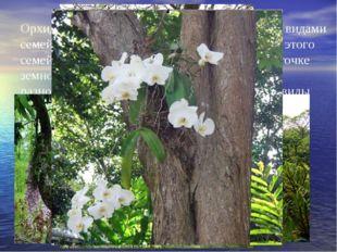 Орхидеи являются одним из наиболее богатых видами семейств растительного мира