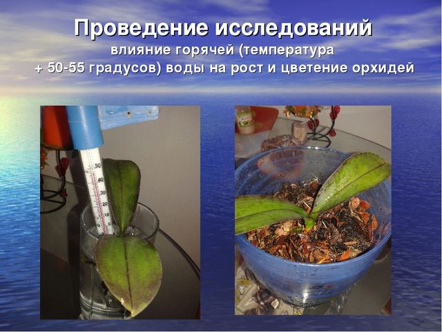 Проведение исследований влияние горячей (температура + 50-55 градусов) воды...