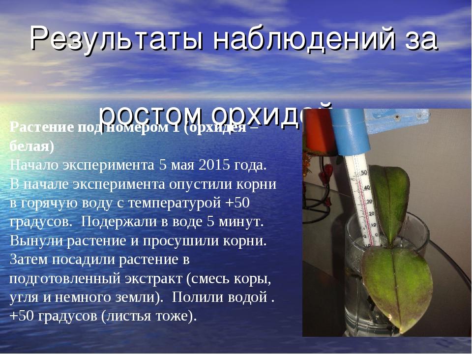 Результаты наблюдений за ростом орхидей Растение под номером 1 (орхидея – бел...