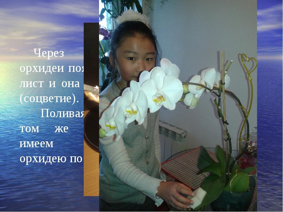 Через месяц у орхидеи появился новый лист и она дала стрелку (соцветие). Пол...