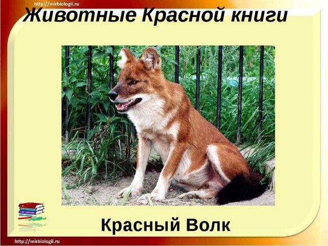 Животные Красной книги Красный Волк