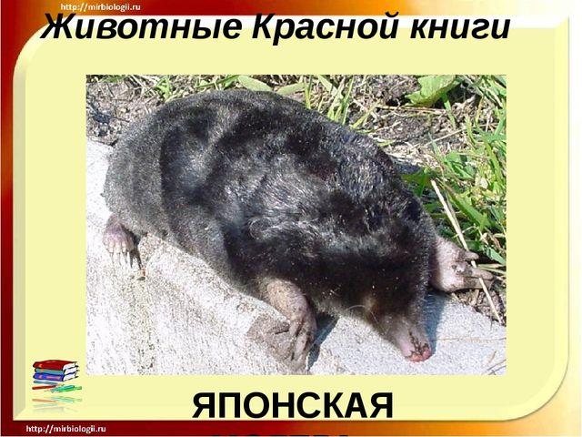 Животные Красной книги ЯПОНСКАЯ МОГЕРА