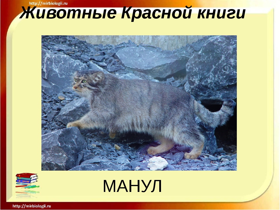 Животные Красной книги МАНУЛ
