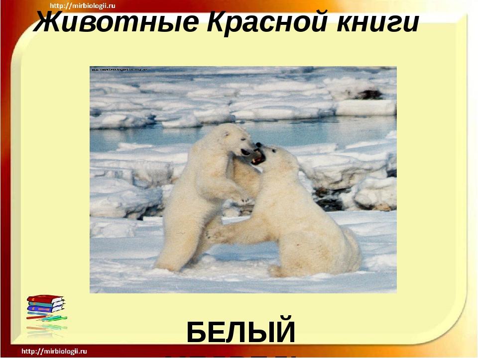 Животные Красной книги БЕЛЫЙ МЕДВЕДЬ