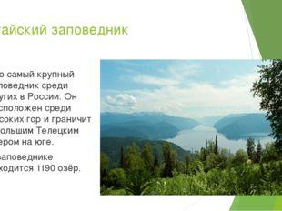 Алтайский заповедник Это самый крупный заповедник среди других в России. Он р