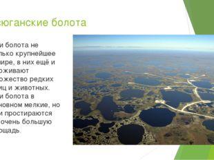 Васюганские болота Эти болота не только крупнейшее в мире, в них ещё и прожив