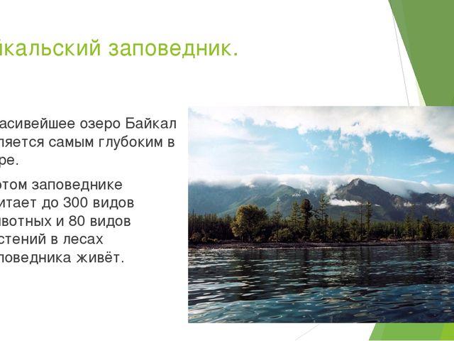 Байкальский заповедник. Красивейшее озеро Байкал является самым глубоким в ми...