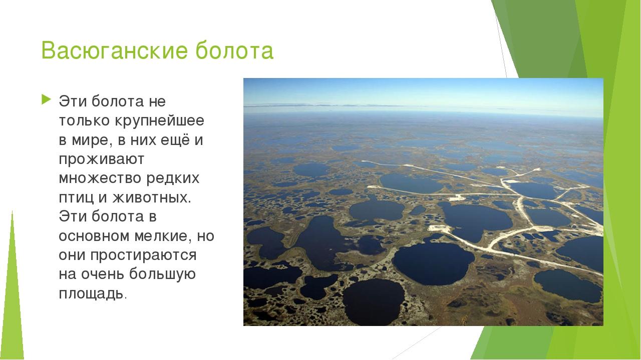 Васюганские болота Эти болота не только крупнейшее в мире, в них ещё и прожив...