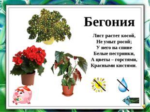 Зигокактус (Декабрист) Зима. Декабрь. Диковенным узором Мороз цветы наносит н