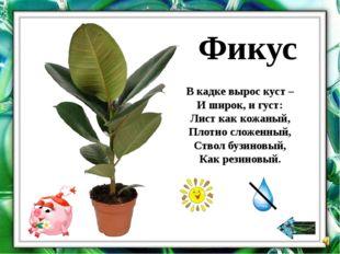 У этих растений листья гладкие, небольшого размера. Их можно опрыскать из пу