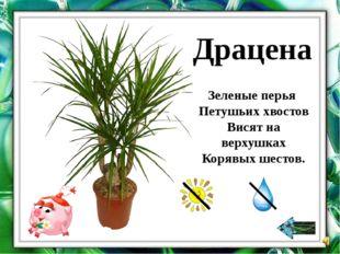 Растения с бархатистыми листьями, покрытыми пушком, чистят сухим способом, с