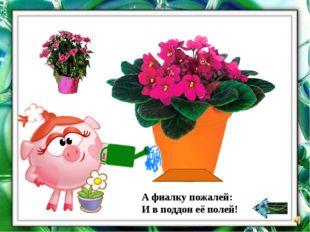 Как растёт растение? Расставьте по порядку.
