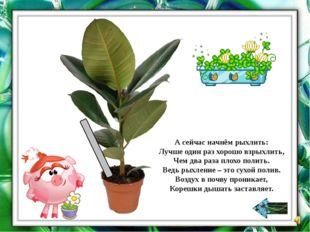 Найдите комнатные растения, у которых листья очищают от пыли с помощью пульве