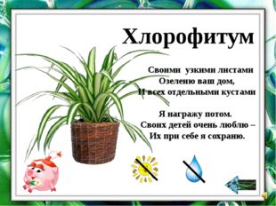 Давайте познакомимся Уход за растениями Давайте поиграем