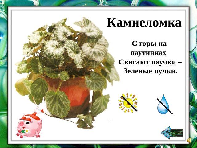 Если у растения большие блестящие листья, потребуется мягкая ткань. Её надо н...