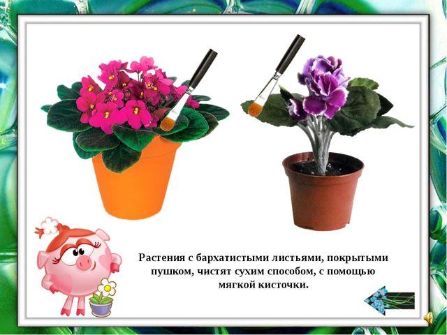 Помогите Нюше расставить растения.