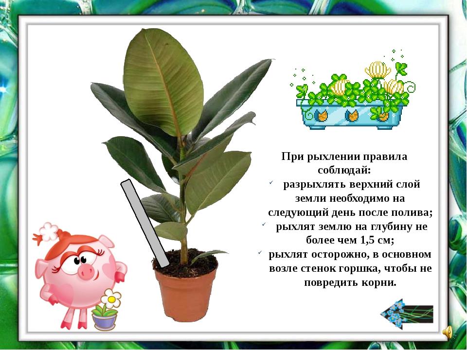 Про какое комнатное растение стихотворение? Хрустит за окошком Морозный денек...