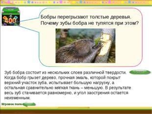 Игровое поле http://edu-teacherzv.ucoz.ru Зуб бобра состоит из нескольких сло