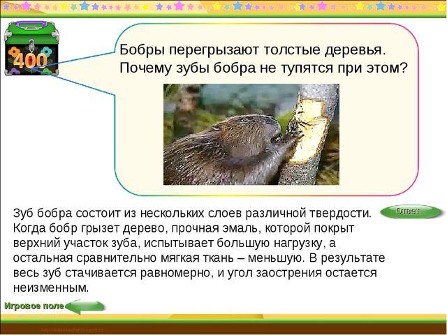 Игровое поле http://edu-teacherzv.ucoz.ru Зуб бобра состоит из нескольких сло...