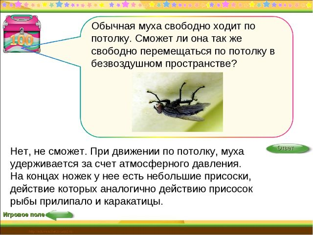 Игровое поле http://edu-teacherzv.ucoz.ru Нет, не сможет. При движении по пот...