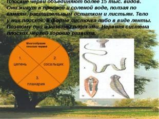 Плоские черви объединяют более 15 тыс. видов. Они живут в пресной и соленой