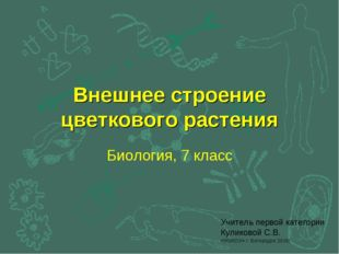 Внешнее строение цветкового растения Биология, 7 класс Учитель первой категор