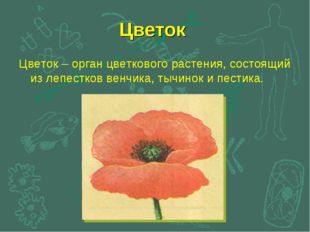 Цветок Цветок – орган цветкового растения, состоящий из лепестков венчика, ты