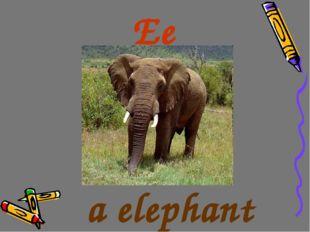 Ee a elephant