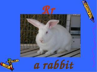 Rr a rabbit