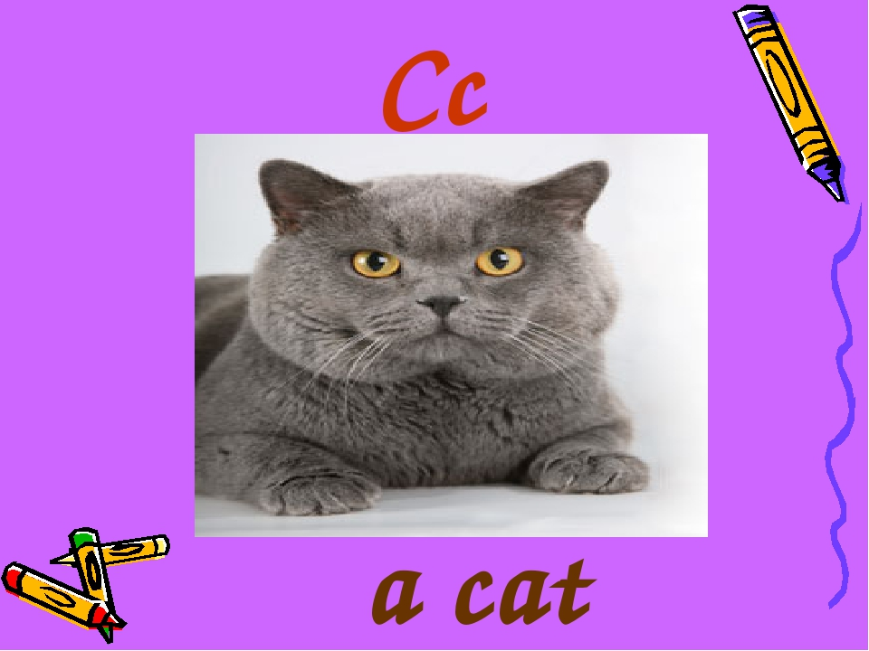 Cc a cat