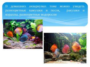 В домашних аквариумах тоже можно увидеть разноцветные камушки и песок, ракушк