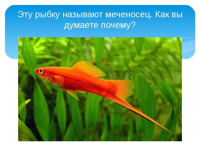 Эту рыбку называют меченосец. Как вы думаете почему?