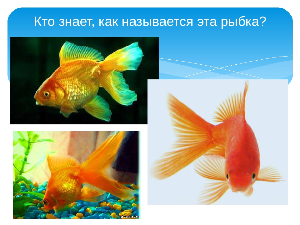Кто знает, как называется эта рыбка?