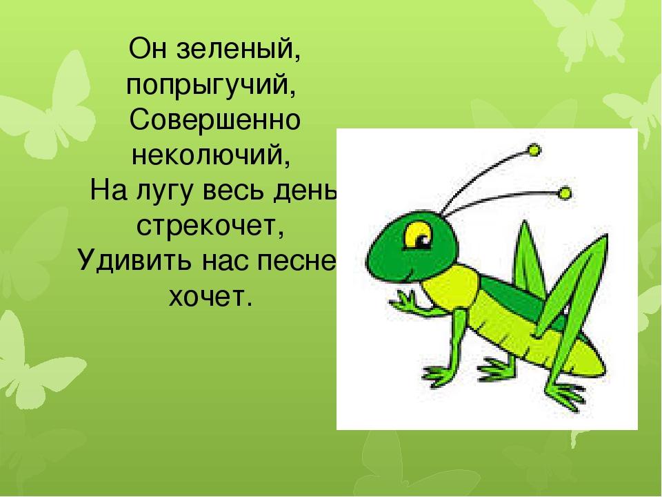 Он зеленый, попрыгучий, Совершенно неколючий, На лугу весь день стрекочет, Уд...