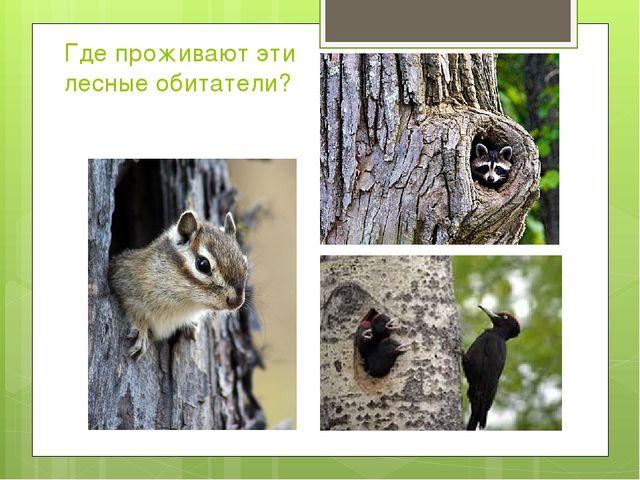 Где проживают эти лесные обитатели?