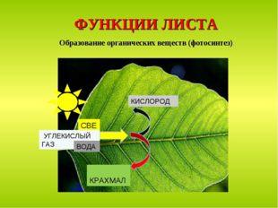 ФУНКЦИИ ЛИСТА Образование органических веществ (фотосинтез) СВЕТ КРАХМАЛ КИСЛ