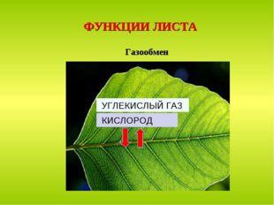 ФУНКЦИИ ЛИСТА Газообмен УГЛЕКИСЛЫЙ ГАЗ КИСЛОРОД
