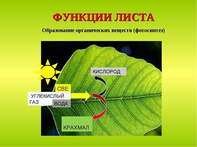 ФУНКЦИИ ЛИСТА Образование органических веществ (фотосинтез) СВЕТ КРАХМАЛ КИСЛ...