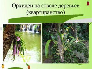 Орхидеи на стволе деревьев (квартиранство)
