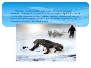 Ямал стал рекордсменом по количеству найденных маленьких мамонтов. Мамонтено