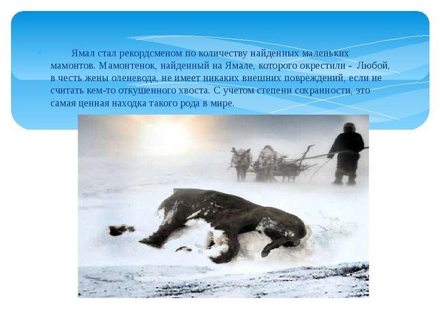 Ямал стал рекордсменом по количеству найденных маленьких мамонтов. Мамонтено...