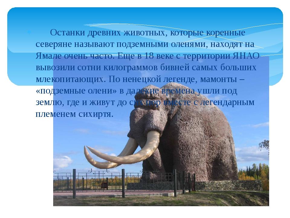 Останки древних животных, которые коренные северяне называют подземными олен...