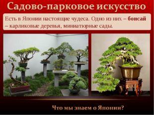 Есть в Японии настоящие чудеса. Одно из них – бонсай – карликовые деревья, ми