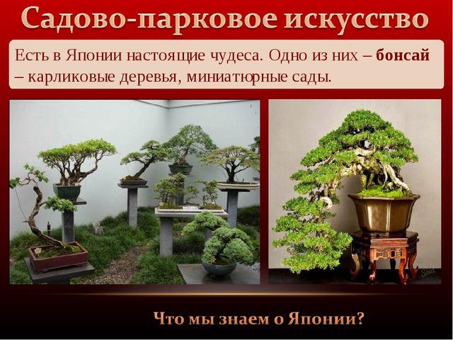 Есть в Японии настоящие чудеса. Одно из них – бонсай – карликовые деревья, ми...