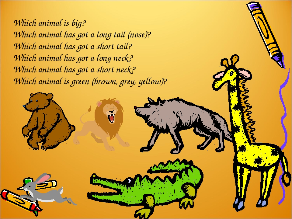 Which animal is big? Which animal has got a long tail (nose)? Which animal ha...