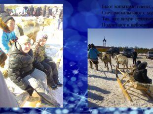 Бьют копытами олени, Снег раскалывают с ходу, Так, что вихри ледяные Подлетаю