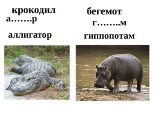 бегемот крокодил гиппопотам а…….р г……..м аллигатор
