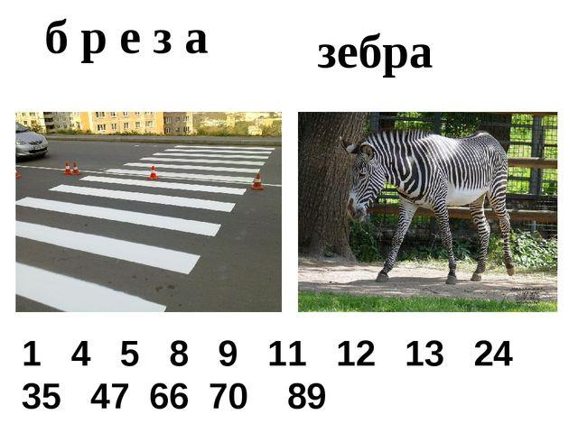 зебра б р е з а 1 4 5 8 9 11 12 13 24 35 47 66 70 89